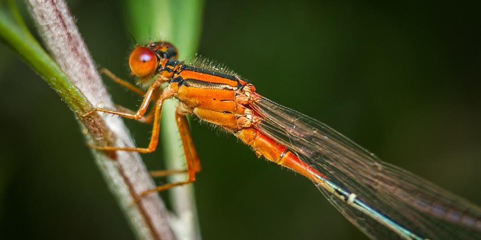 Intriguing Invertebrates