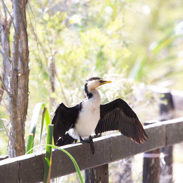 Monthly Morning Birdwalk (17 October)