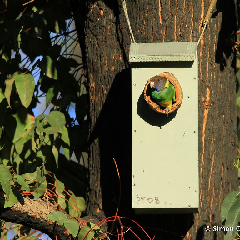 Nest Box Building Workshop