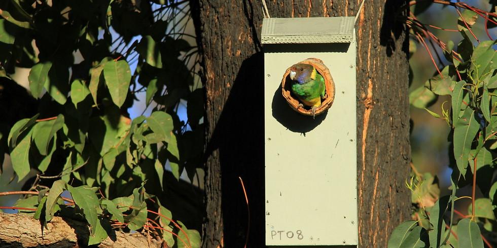 SOLD OUT - Nest Box Building Workshop