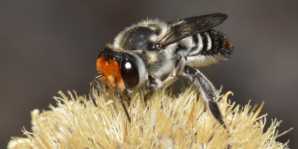 A Buzz About Bees 1:30- 3:30pm