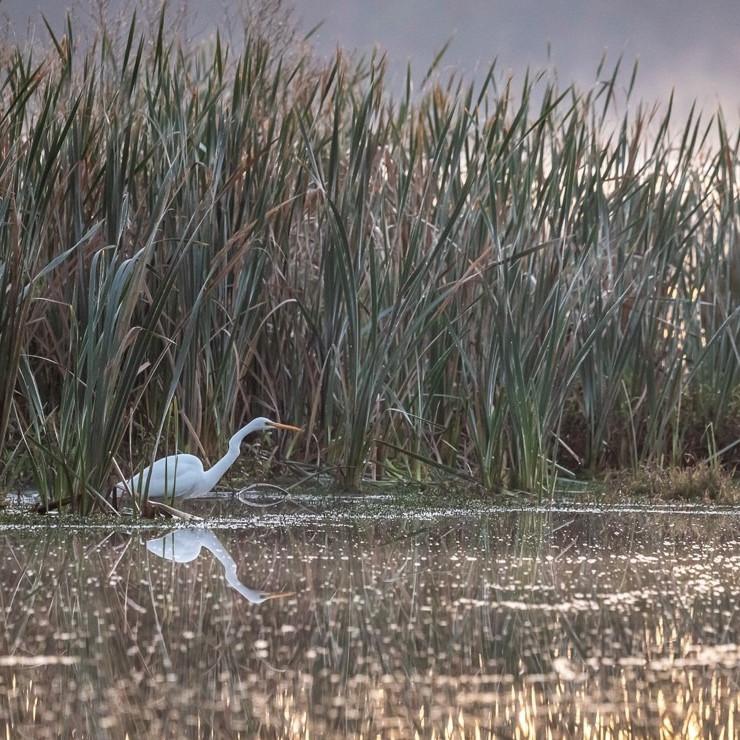 Monthly Morning Birdwalk (Third Sunday of the Month)