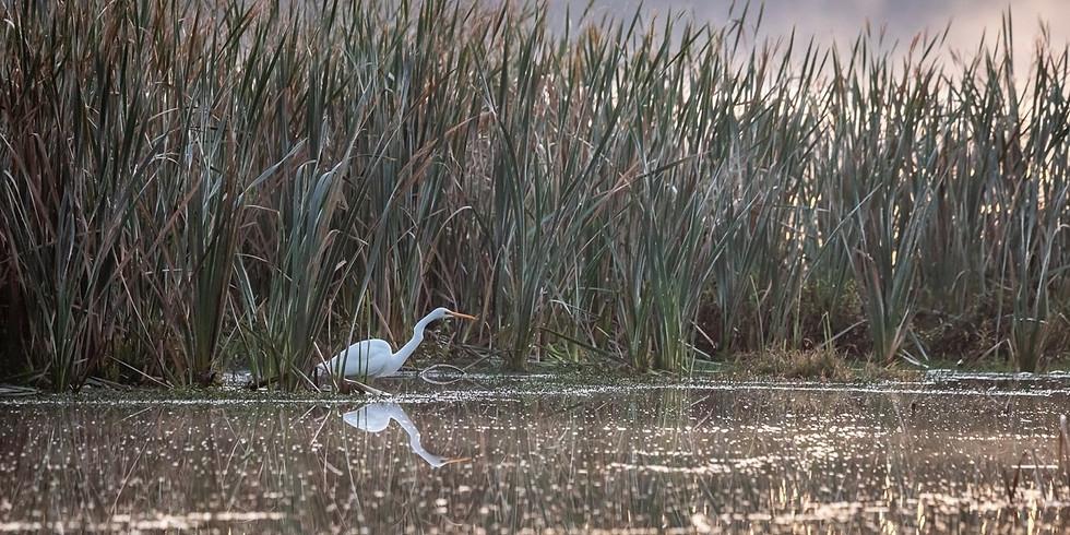 Monthly Morning Birdwalk (19 Sept)
