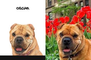 Oscar sbs.jpg