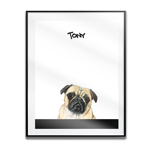 Tony the Pug