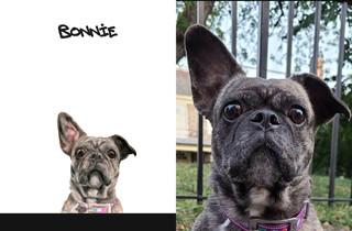 Bonnie sbs.jpg
