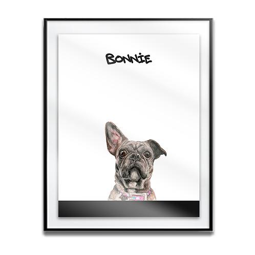 Bonnie the Frenchy