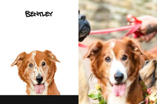 Bentley sbs.jpg