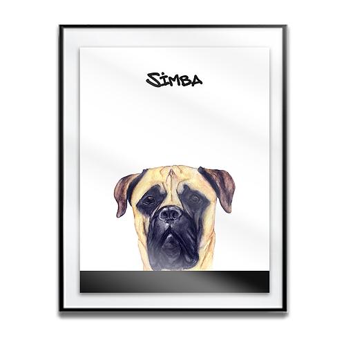 Simba the Bullmastiff