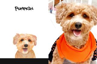 Pumpkin sbs.jpg