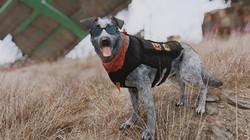Dogmeat - A True Companion