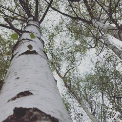 les bois