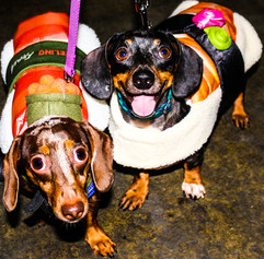Love Mutts Rescue Event