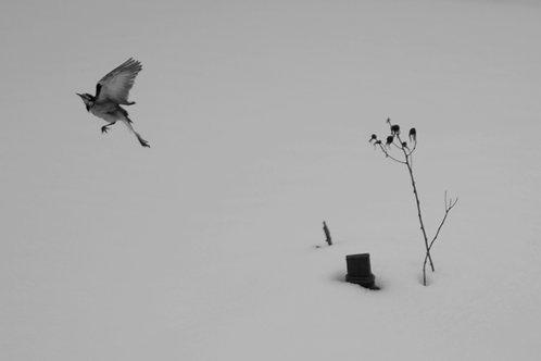 部屋からの風景 鳥 雪
