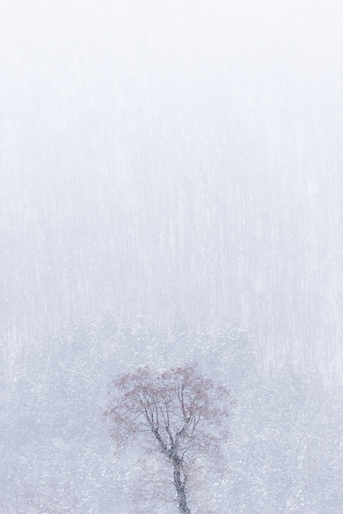 Landscape photo 原風景