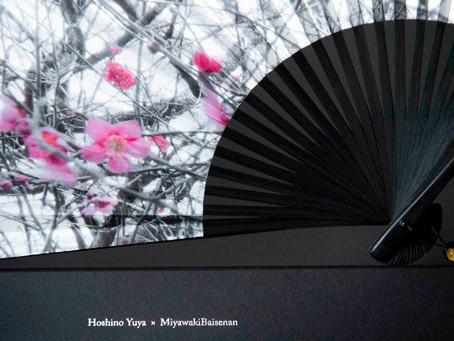 Hoshino Yuya × Miyawaki Baisenan 2019.02.20