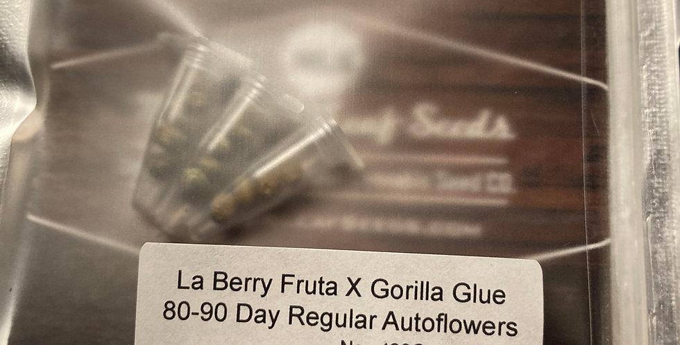 12 pack of La Berry Fruta X Gorilla Glue Regular Autoflowers