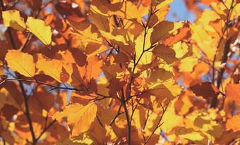Traverser l'automne sereinement
