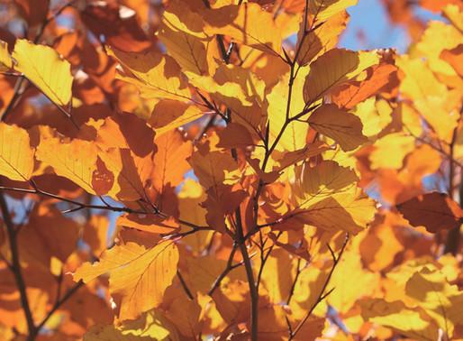 L'automne et l'hiver, un temps d'intériorisation