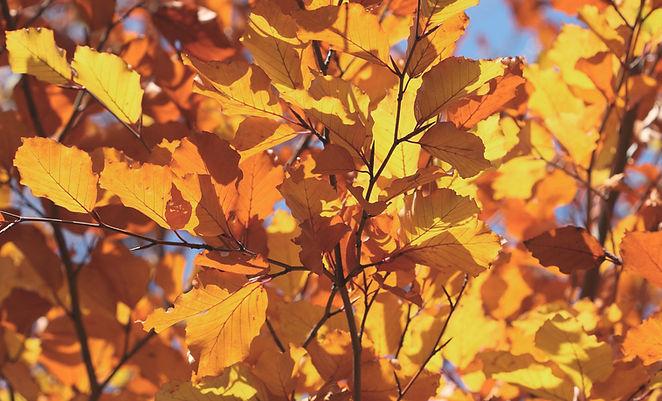сентябрь, желтые листья, осень