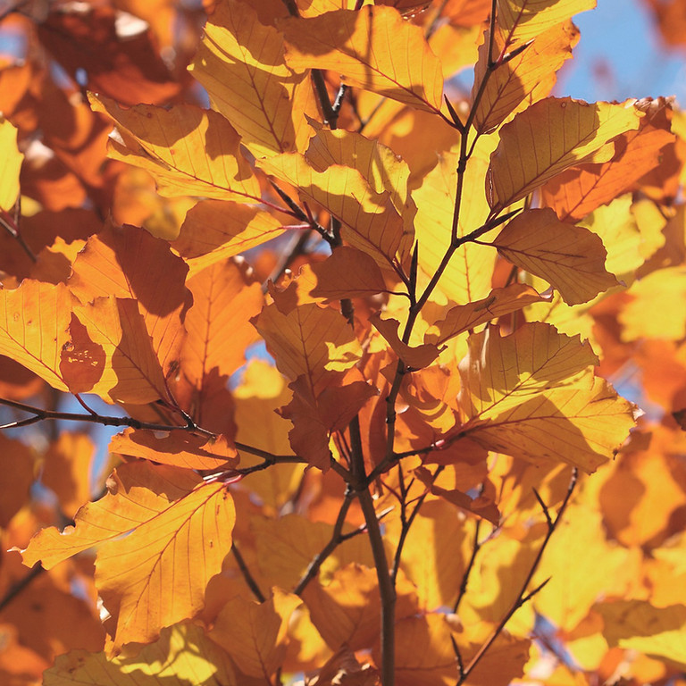 "Herbstverkauf in unserer ""Kinderoase"""