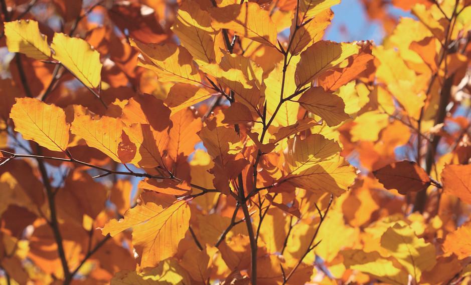 Joy in the Autumn