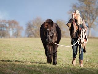 Ein neues Pferd?