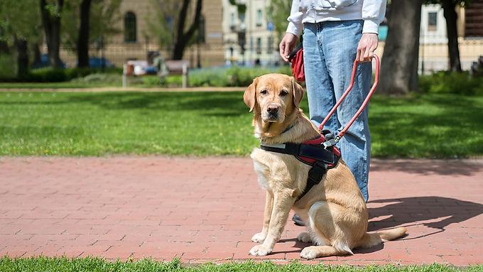 Service Dog Foundations
