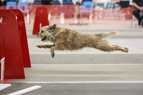 Intro To Flyball