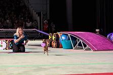 Puppy Gymnastics