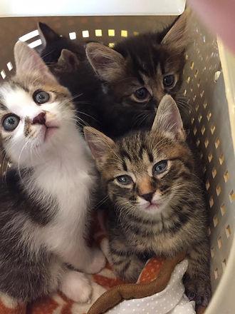 にゃんとも_20160604 子猫.jpg