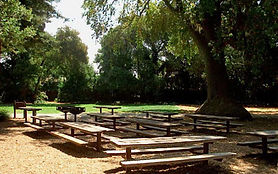 redwood1_0.jpg