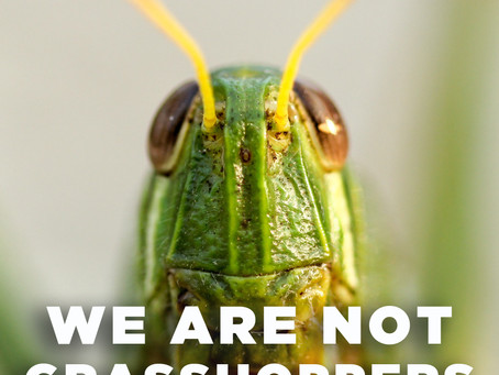We Are Not Grasshoppers