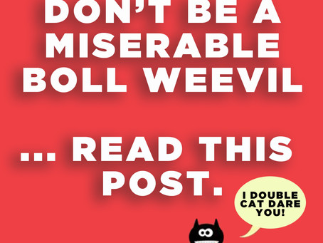 Don't Be A Miserable Boll Weevil ... Read This Post!