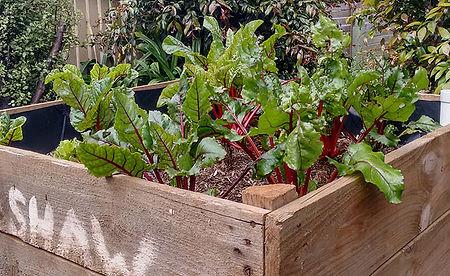 Potato bin vegetable planter box
