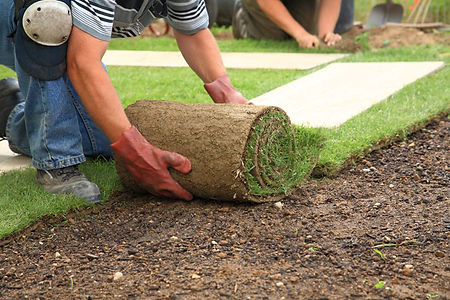 Landscaping laying turf