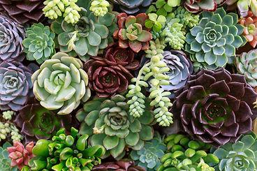 Succulent vertical garden
