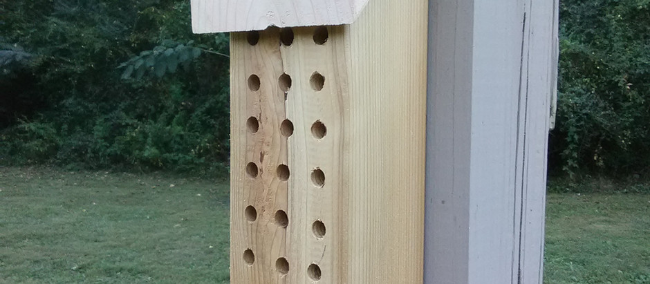 How to Attract Mason Bees to Your Yard