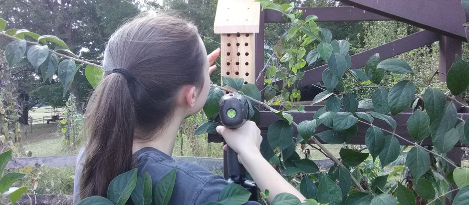 Why Habitat Conservation Plans Should Include Mason Bees