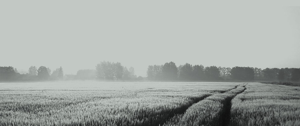 PLI-Field-Crop-1.jpg