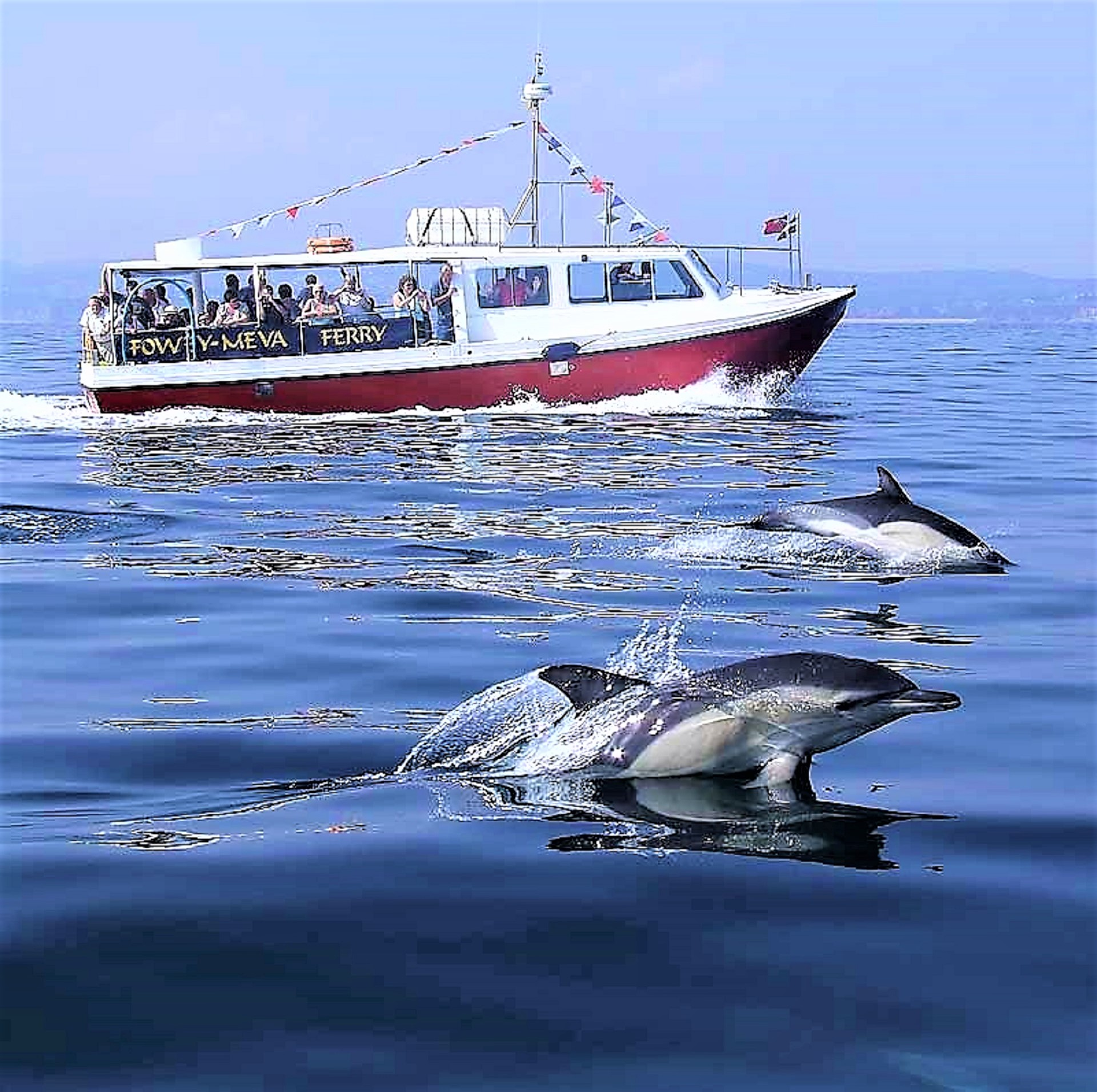 fowey ferry and dolphins2