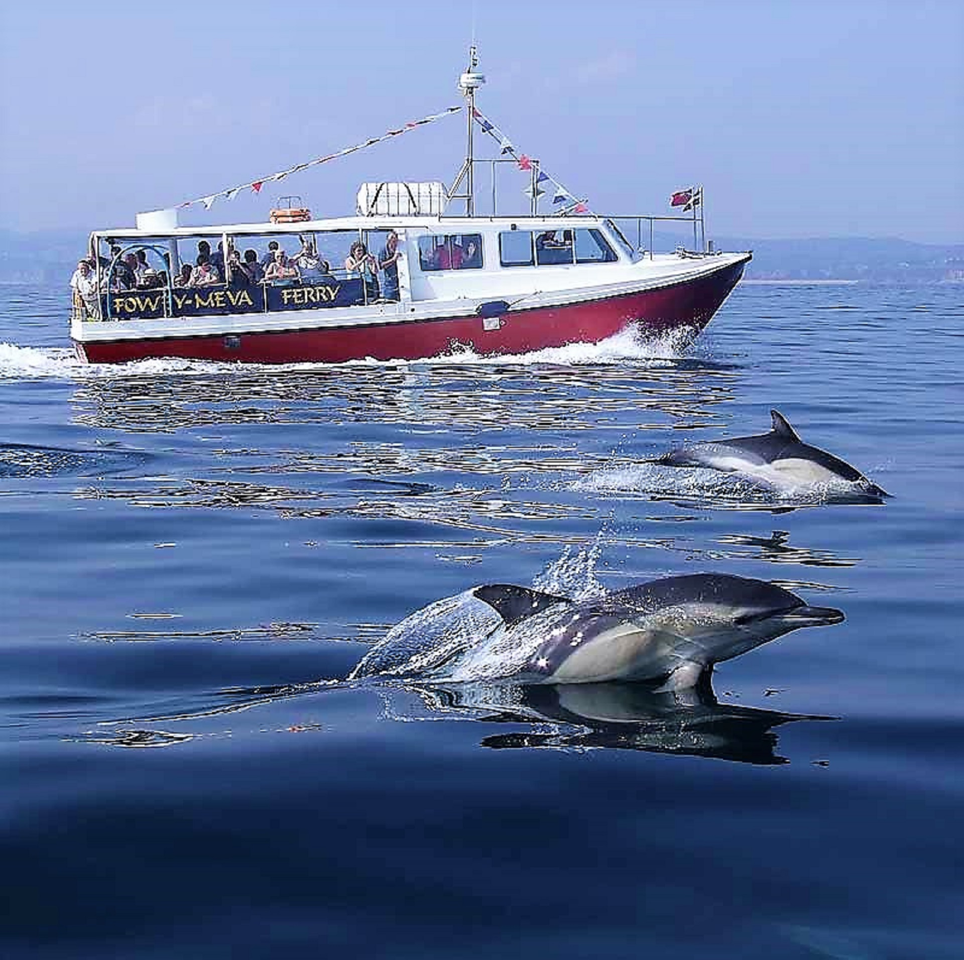 Fowey ferry and dolphins