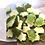 Thumbnail: Haribo Turtles