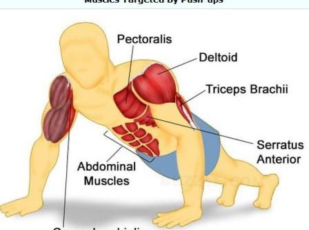 Benefits Of Push Up!
