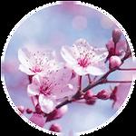 Honey-Blossom.png