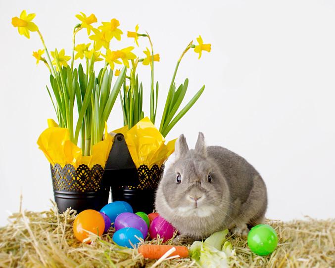 Easter Minis 2018