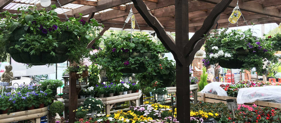 Hanging baskets are now in stock at all of our branches