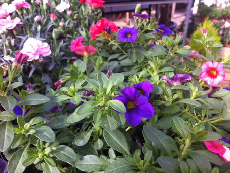 Packed summer bedding
