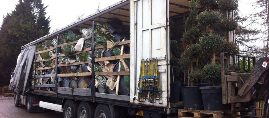 The Italian plants have just arrived!!