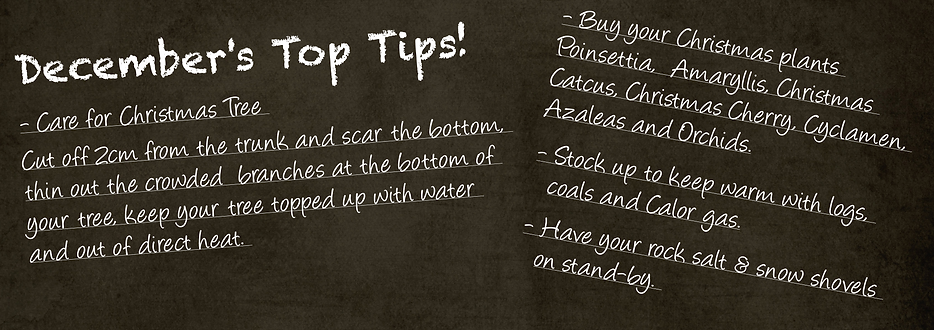 garden centre bexley abbeywood top tips